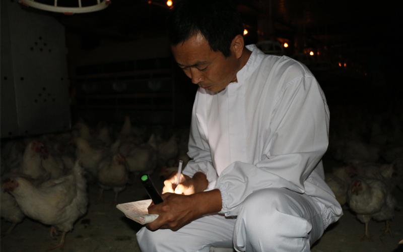 鸡舍里,经常能听到王场长深夜检查的脚步声。